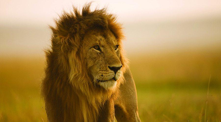 almasi_masai-mara-safari